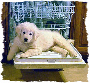 Sera, as a puppy