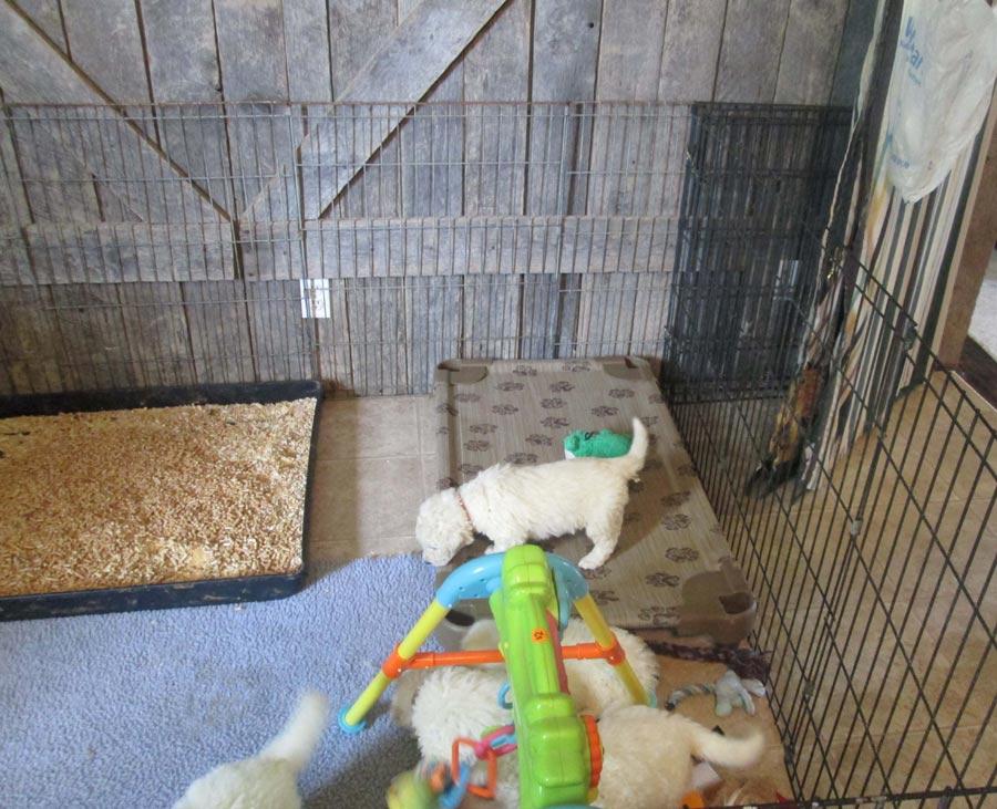 puppy-pen-4-weeks-0714-cR